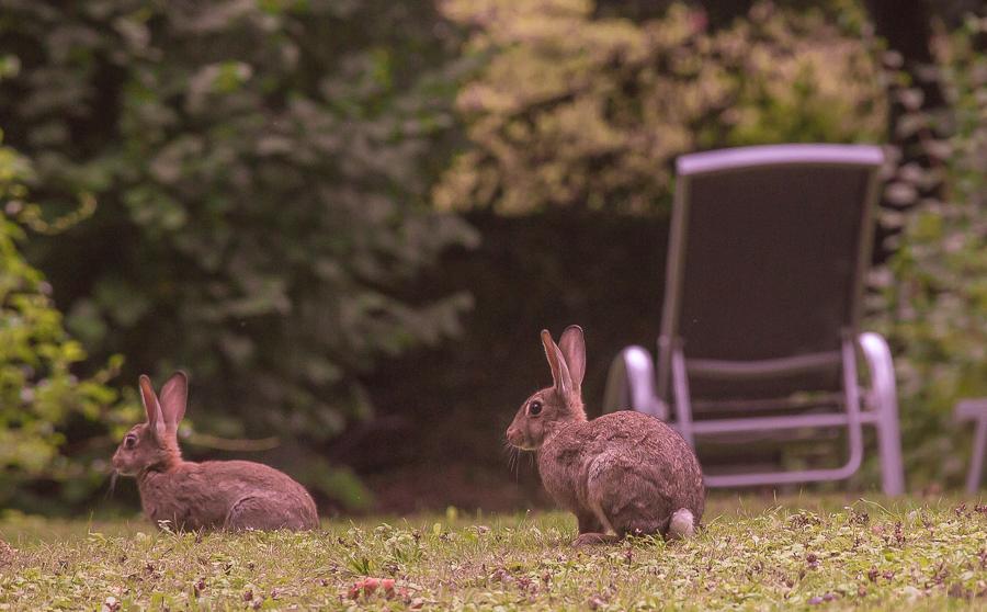 похудение пузанет зайцы
