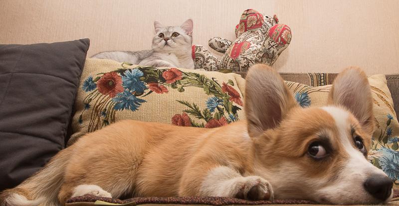 кошка с собакой на самоизоляции
